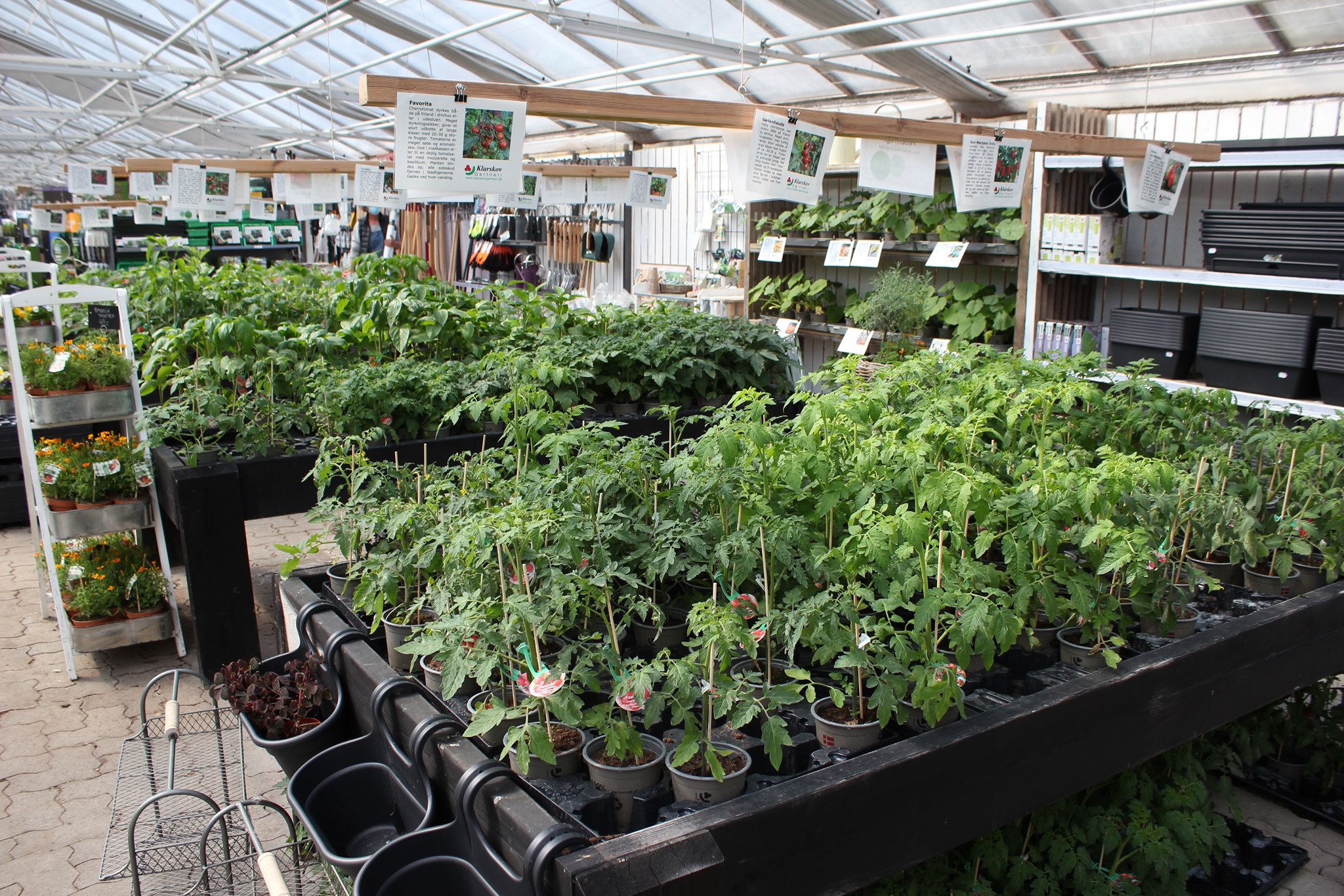 Tomatplanter, agurkeplanter og andre planter til udplantning fra Grønne Hjem.