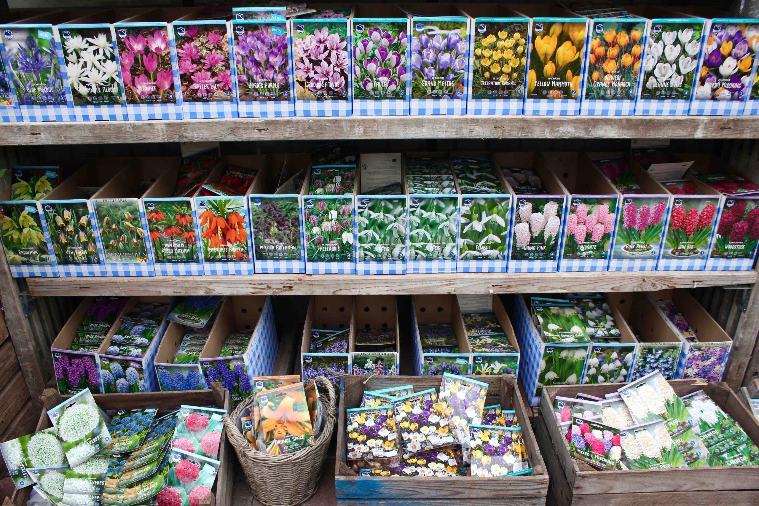 Grønne Hjem har fået blomsterløg hjem. På billedet ses narcisser, krokus, tulipaner, perlehyacinter og mange andre blomsterløg.